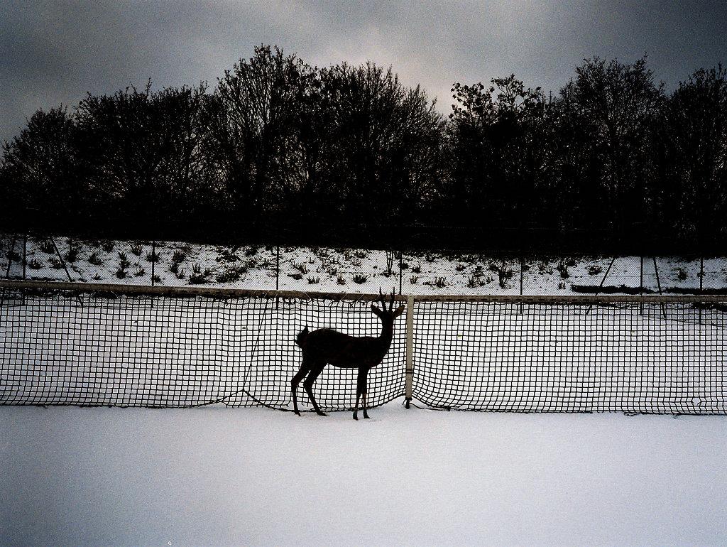 Deer Tennis 2017